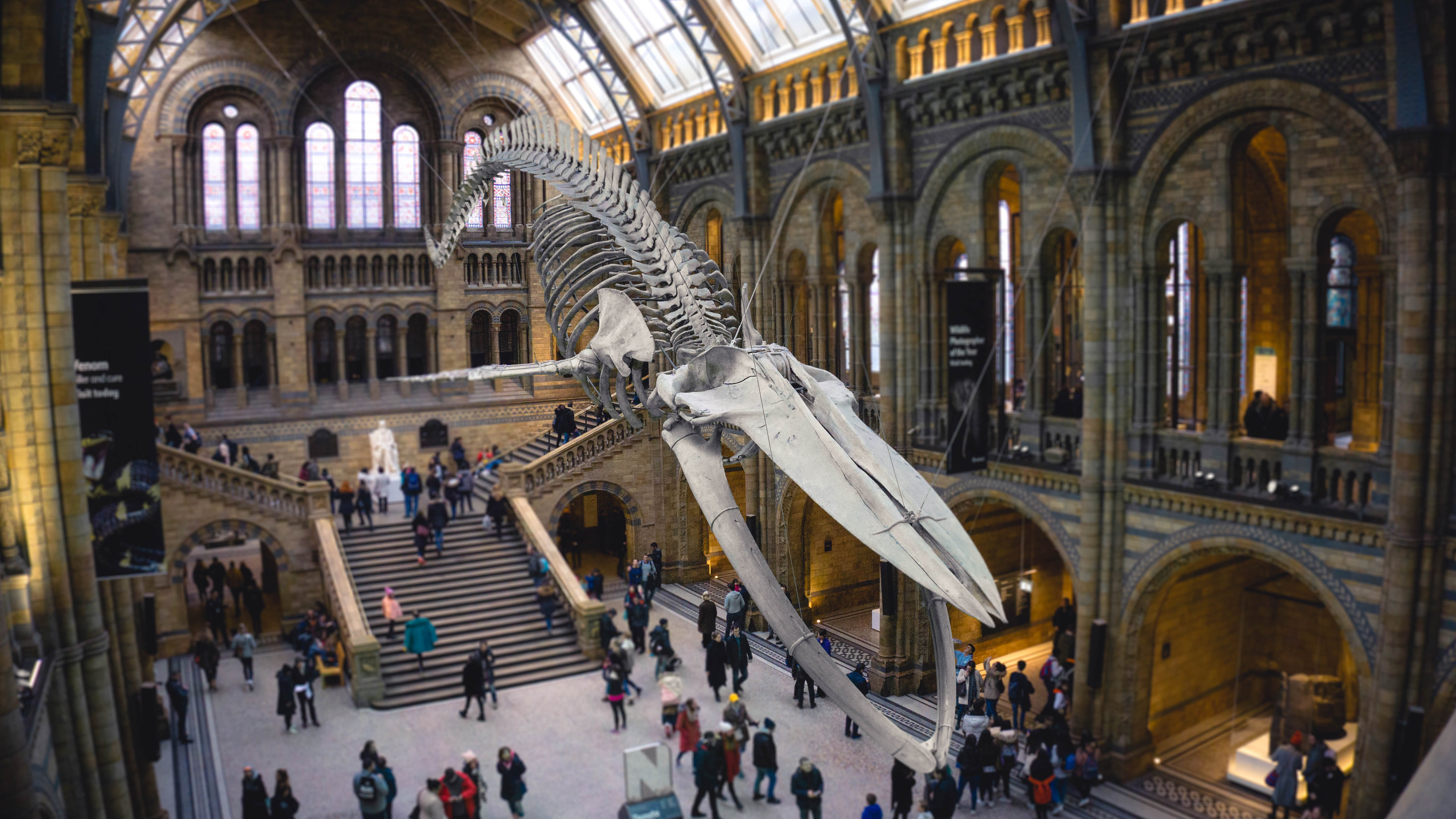 Natural History Museum i London