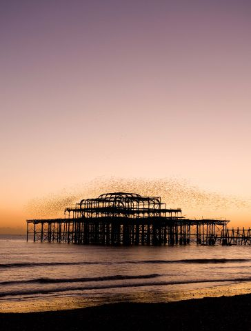 Studere i England - University of Sussex - Brighton West Pier