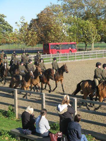 Studere i England - Writtle University College - hest