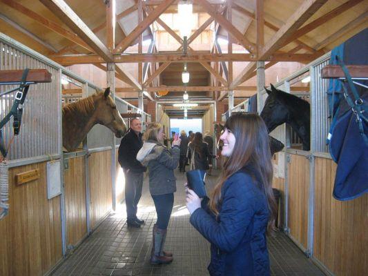 Studere i England - Writtle University College - hestestudier